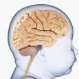 aprende-a-estimular-el-desarrollo-cerebral-de-los-bebes_iwcgn