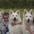 aspectos-basicos-para-la-convivencia-de-ninos-y-perros_ij70p