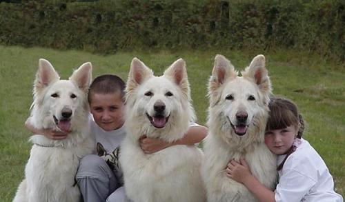 Aspectos básicos para la convivencia de niños y perros
