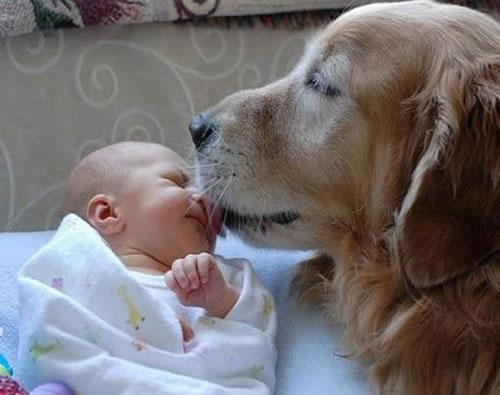 bebe-y-mascota-en-casa_zmijb
