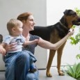 consejos-para-manejar-situacion-de-la-llegada-del-bebe-y-mantener-un-perro-en-casa_re38s