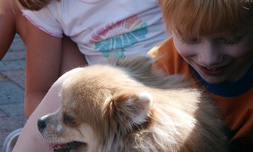 Consejos para preparar a los niños a tener mascotas en casa