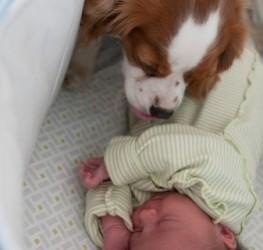 consejos-para-tener-una-mascota-y-un-bebe-recien-nacido-en-casa_knwxm