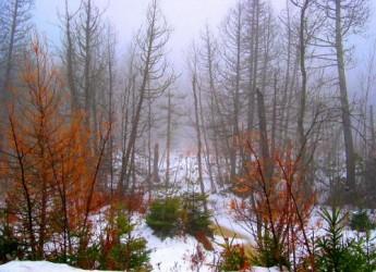 descubrir-el-bosque-con-todos-los-sentidos_xwezj