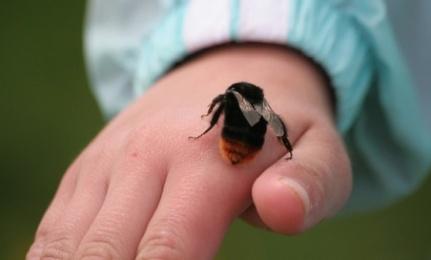 El temor de los pequeños hacía los insectos