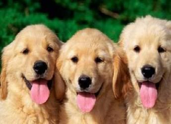 elije-el-mejor-perro-para-tus-ninos_3nmls