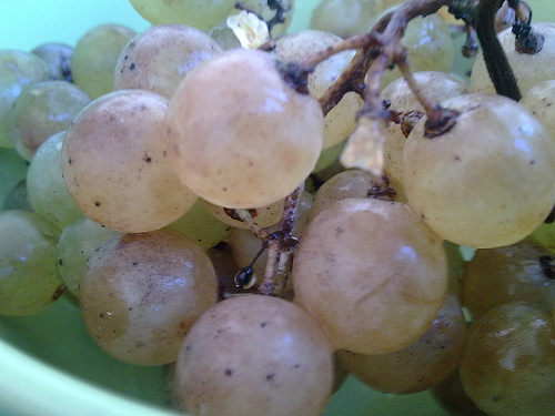 las-doce-uvas-de-nochevieja_c8vh0