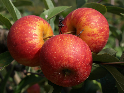 Manzanas para reducir el colesterol