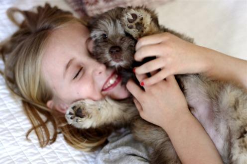mascotas-como-cuidarlos-de-los-parasitos_kqj90
