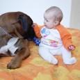 riesgos-de-dormir-con-las-mascotas_97a13