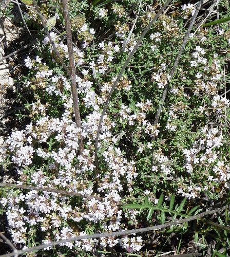 Utilidades de las plantas arom ticas gu a para padres - Plantas aromaticas en la cocina ...